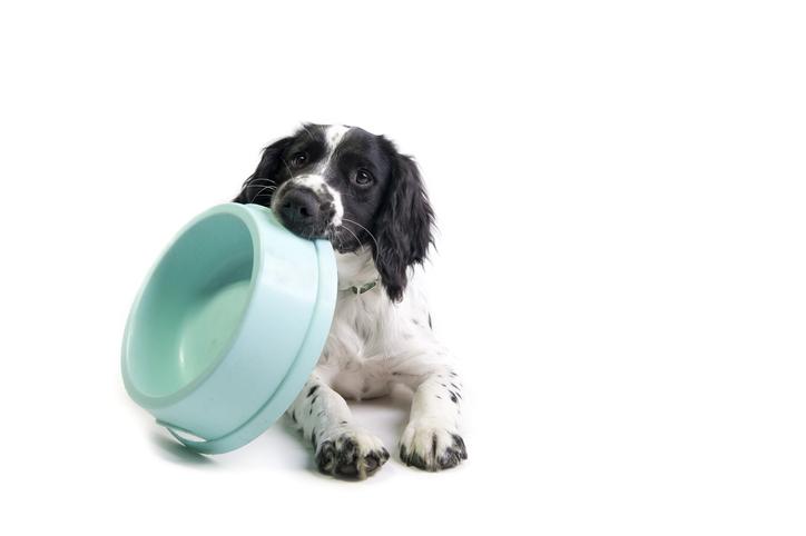 salute del cane alimentazione equilibrata