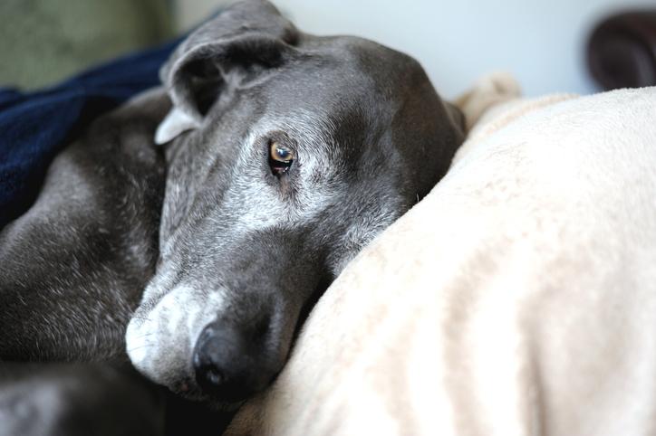 salute del cane curarlo durante la vecchiaia