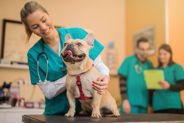 salute del cane veterinario visita