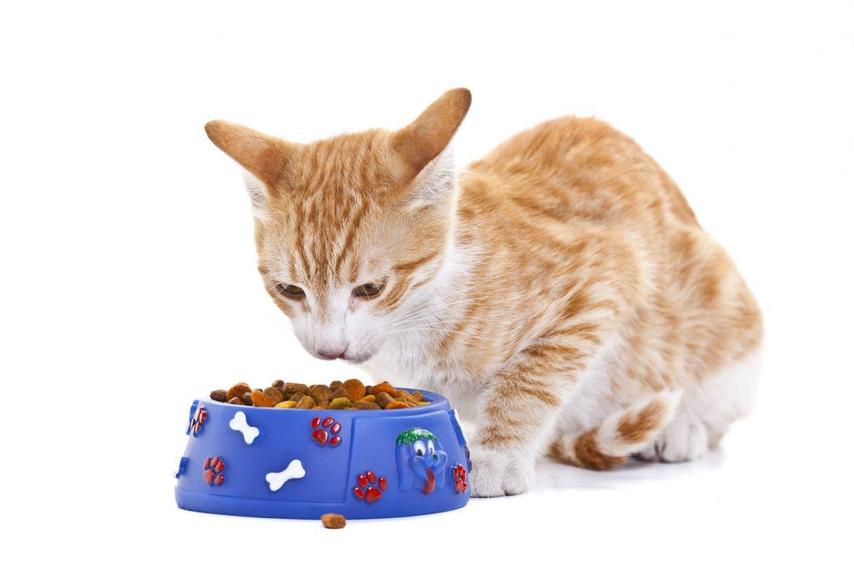 Alimenti per gatti i dieci consigli per scegliere quelli giusti