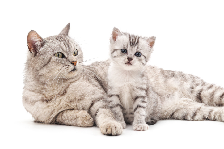 Cibo per gatti cosa serve per lo svezzamento