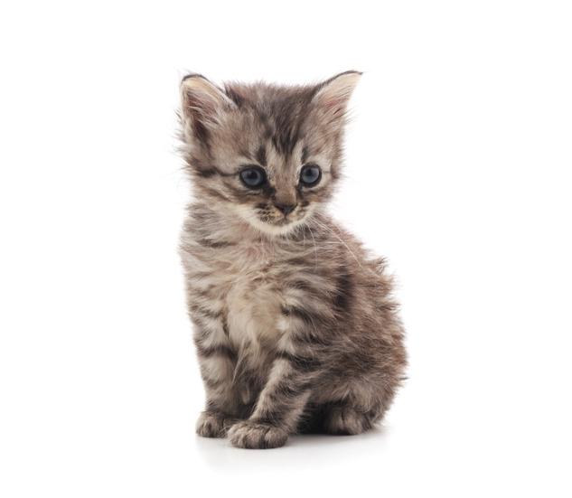 Alimenti per gatti cos'è la taurina