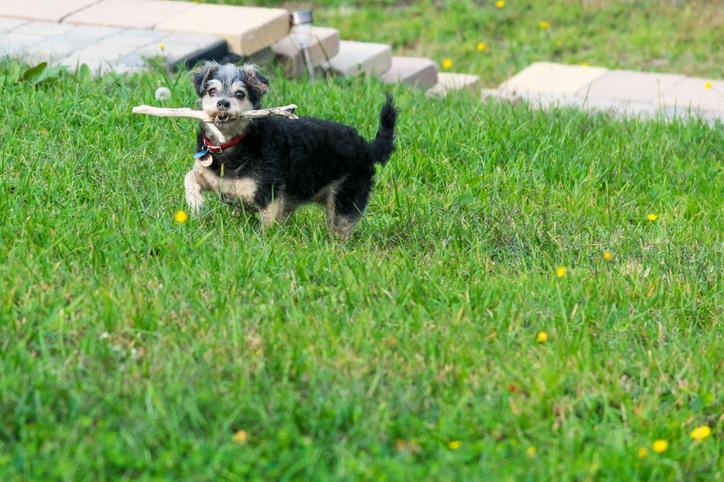 Coda del cane cosa significa il movimento ampio di coda e fianchi