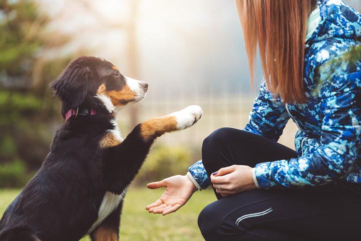 Pet therapy attività assistite con animali