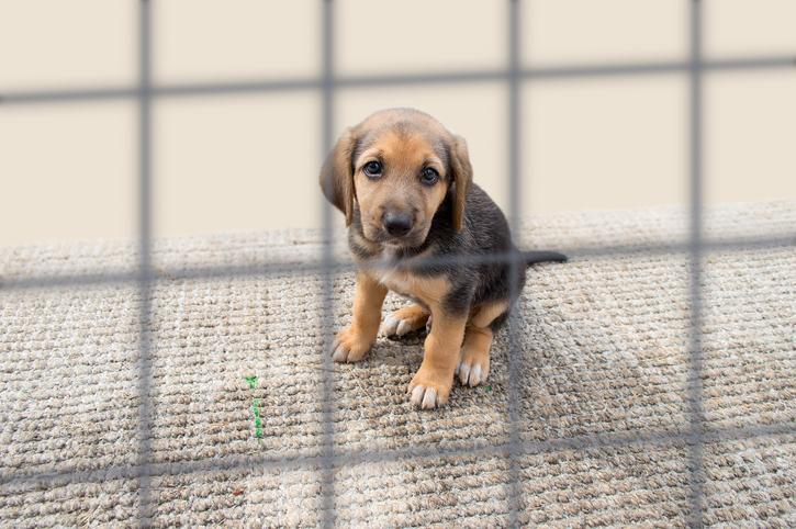 Protezione animali numeri utili per segnalare maltrattamenti e abbandoni
