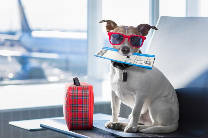 Vacanze con il cane cosa fare se viaggi in aereo
