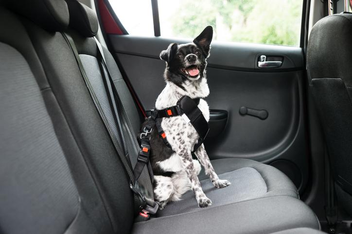 Vacanze con il cane cosa fare se viaggi in auto