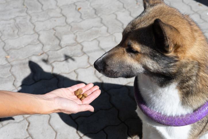 Vacanze con il cane quale cibo somministrare