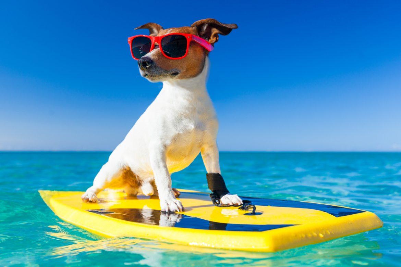 Vacanze con il cane i dieci consigli utili
