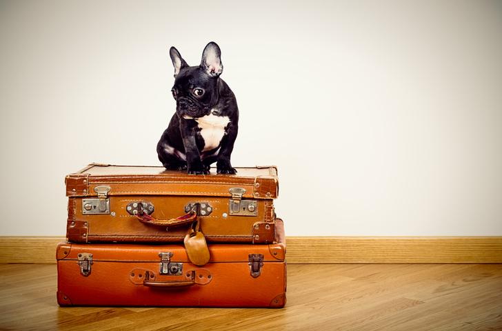 Vacanze con il cane dieci consigli per vacanze senza stress
