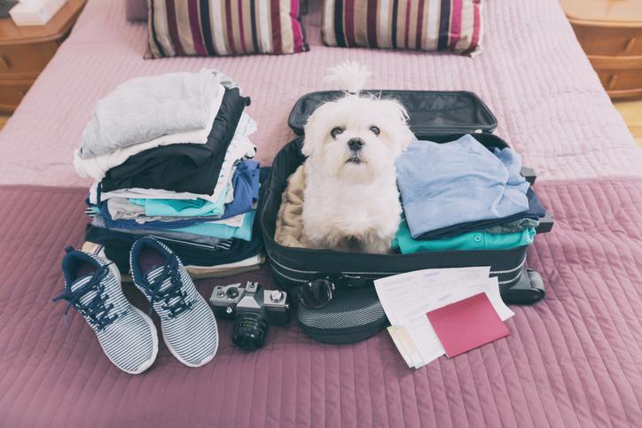 Vacanze con il cane quali sono i documenti necessari