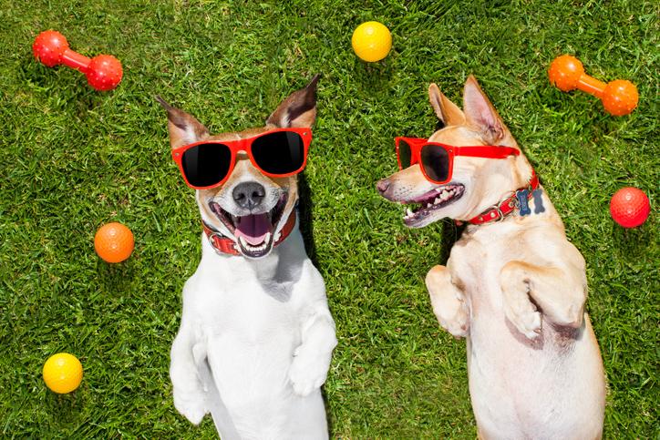 Vacanze con il cane perché in viaggio portare il suo gioco preferito