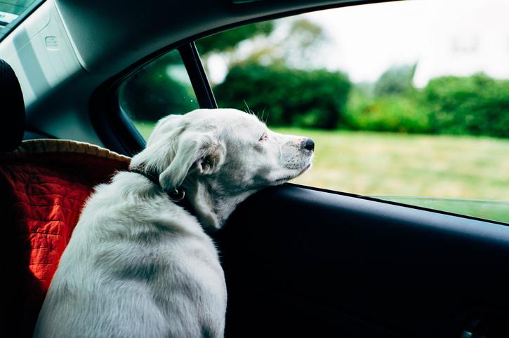 Vacanze con il cane la temperatura e il rumore durante il viaggio