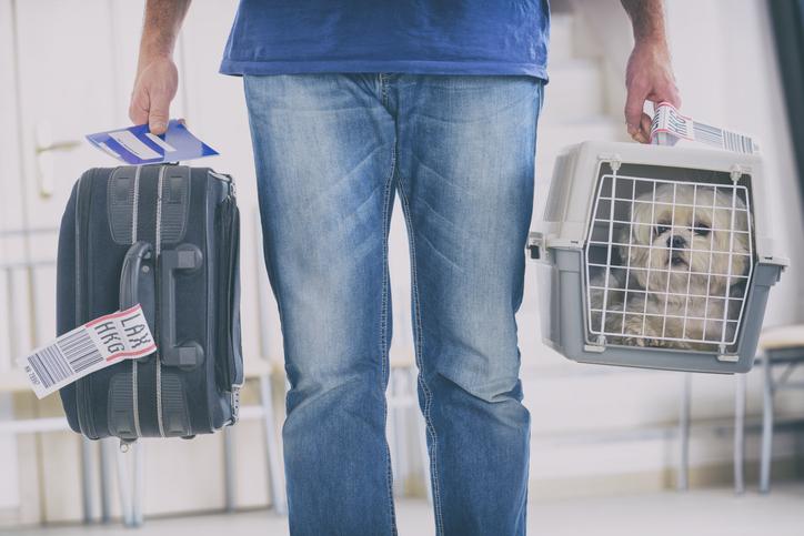 Vacanze con il cane cosa fare se viaggi in treno