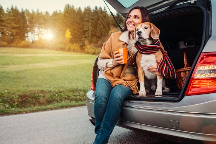 Vacanze con il cane cosa fare durante il viaggio
