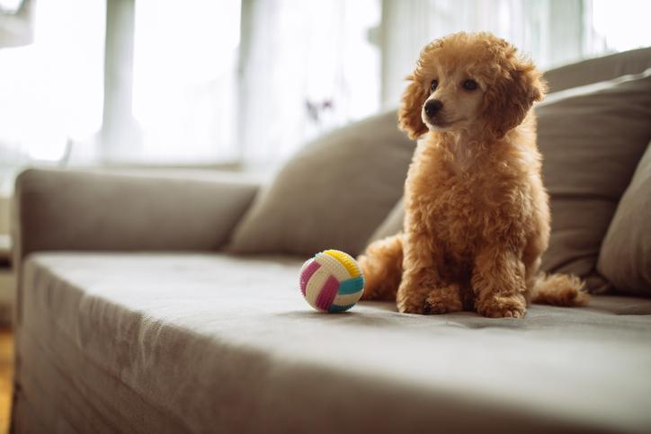 addestramento cani come gestire la libertà in casa