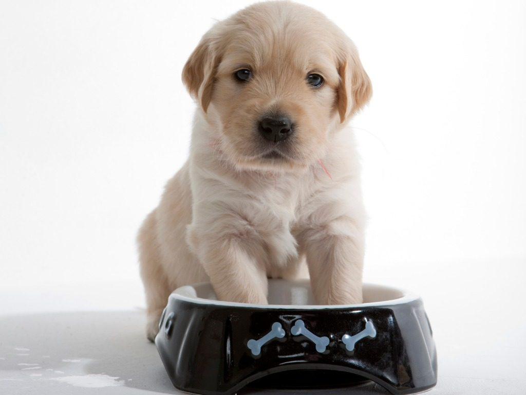 addestramento cani il momento dedicato al pasto