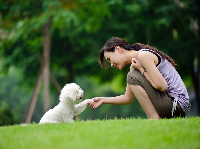 addestramento cani quali sono i comandi