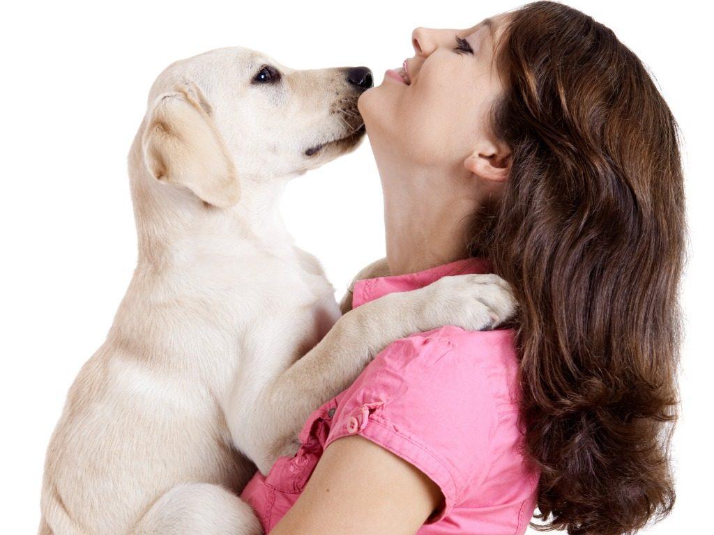 addestramento cani dieci consigli per educarlo