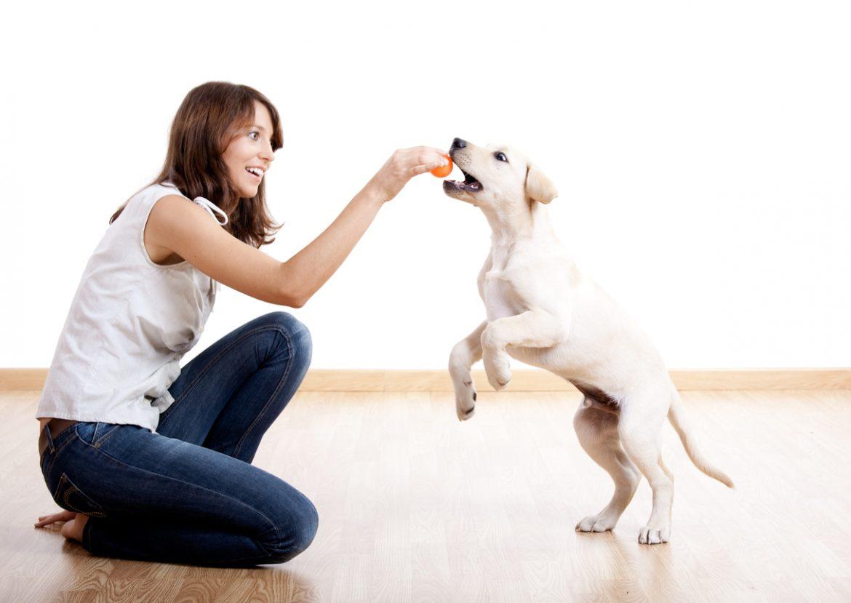 addestramento cani come educarlo e dieci consigli