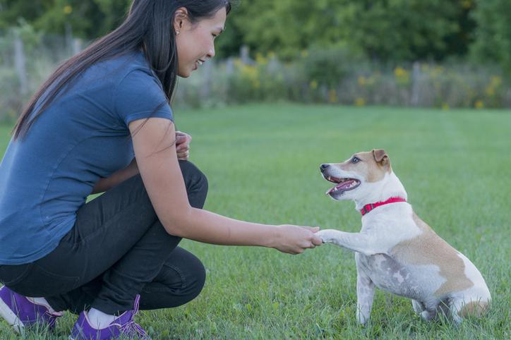 addestramento cani quanto tempo serve