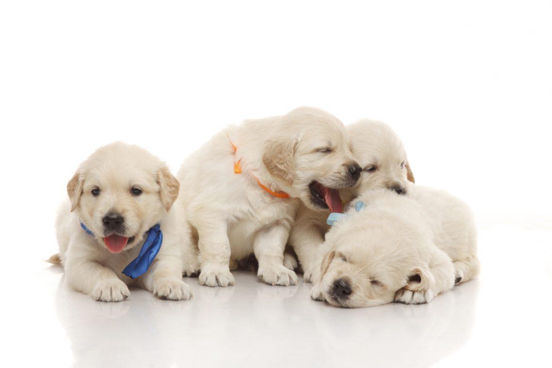 nomi per cani tutto sulle curiosità e i consigli