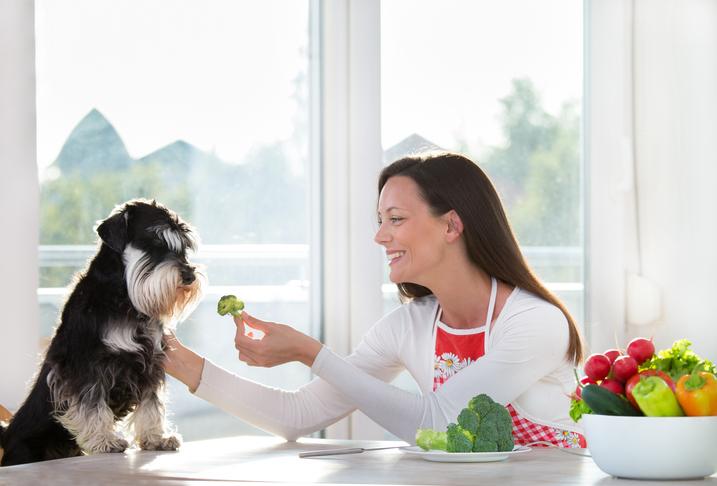 alimentazione casalinga cane quali sono gli alimenti da non somministrare