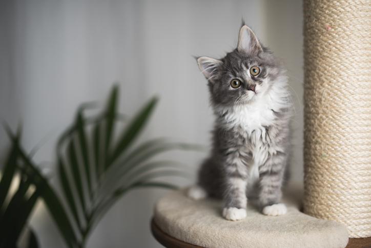 gatto in appartamento come costruire una casa su misura per lui