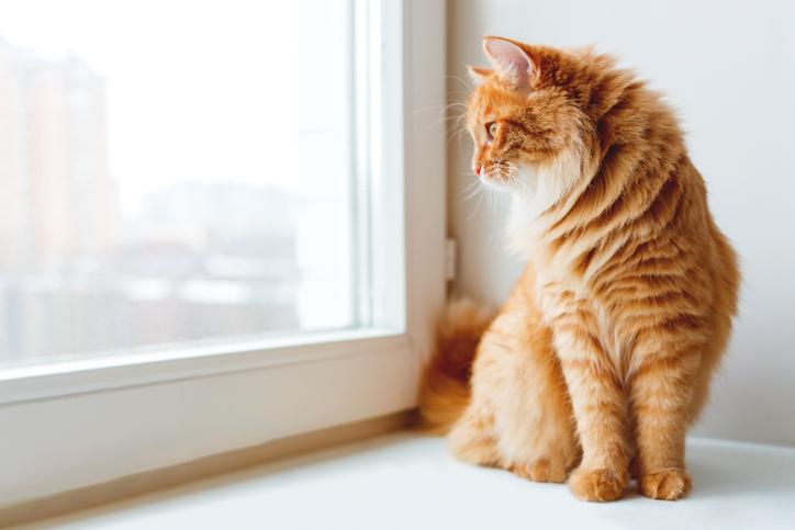 gatto in appartamento cinque consigli per una vita felice