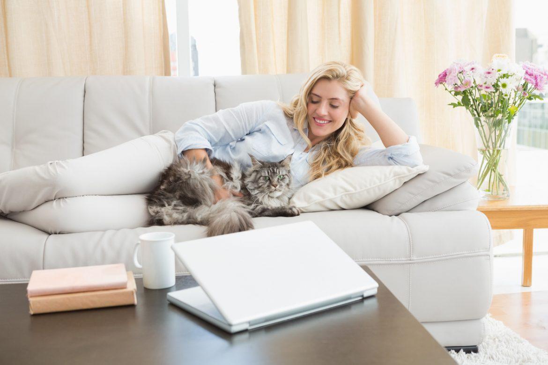 gatto in appartamento come farlo vivere felice