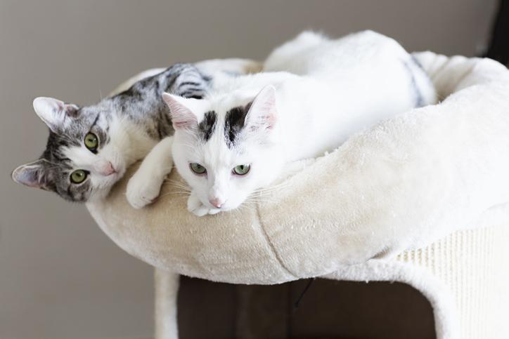 gatto in appartamento perché due gatti sono meglio di uno