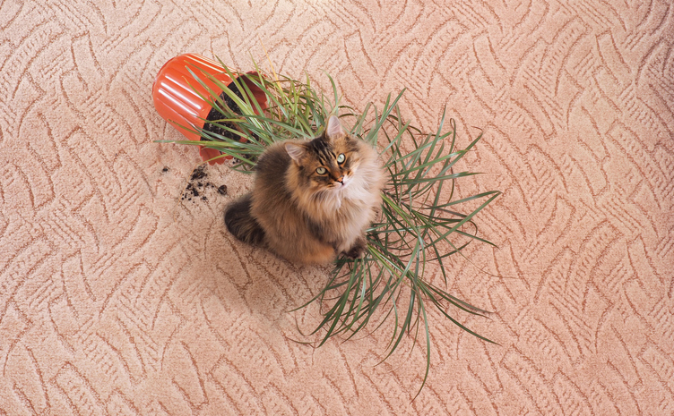gatto in appartamento cosa fare quando è dispettoso