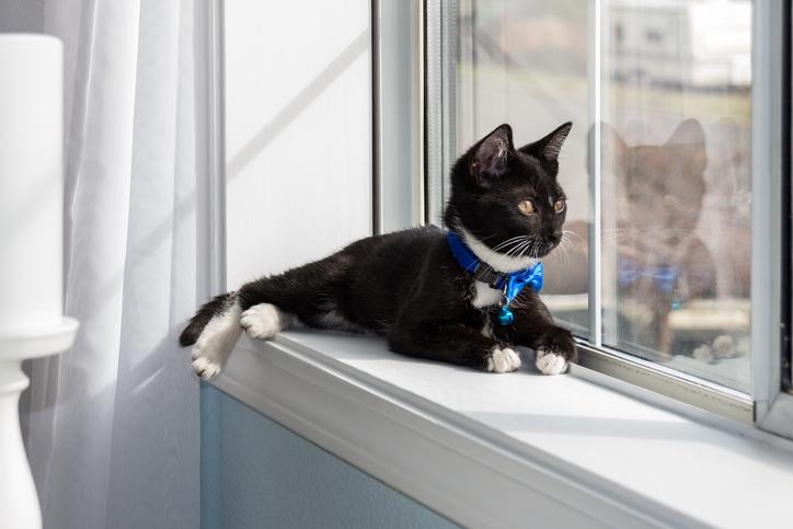 gatto in appartamento come non fargli soffrire la solitudine