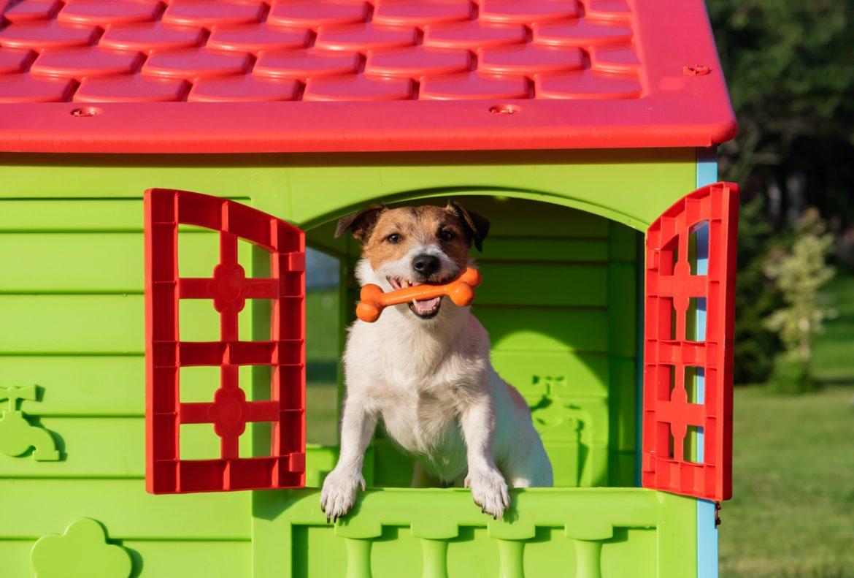 cucce per cani guida all'acquisto