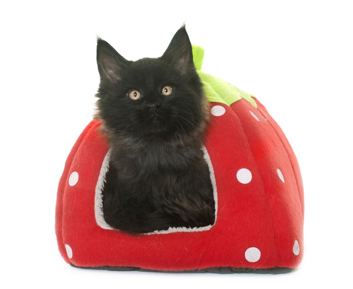 Cuccia Gatto Fai Da Te cuccia per gatti: come scegliere quella giusta e far felice