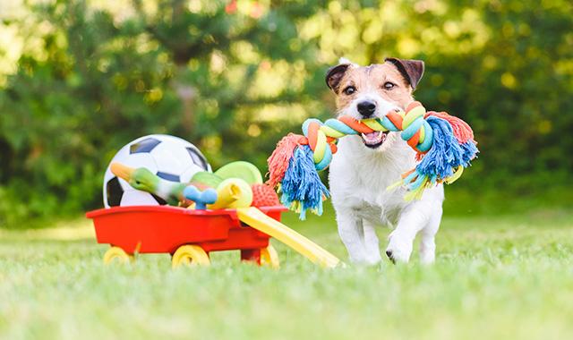 Giochi per cani fai da te: le idee homemade