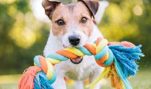 Giochi per cane fai da te all'anice