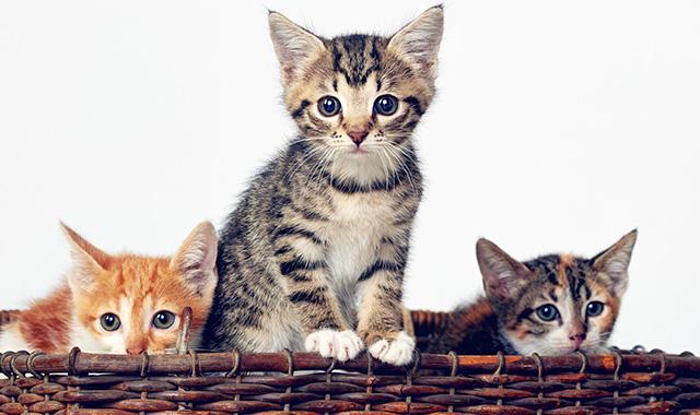Nomi per gatti scegliere