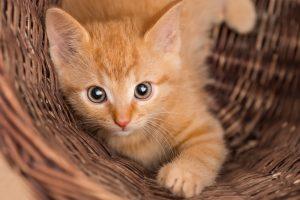 Nome gatto Garfield
