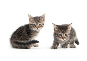 Nomi gattini