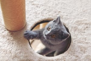 Nome gattino