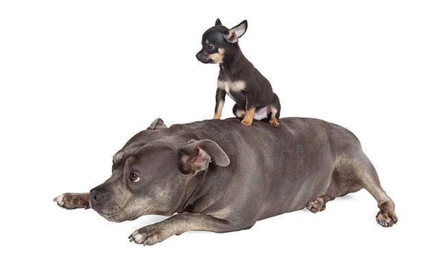 Perché sterilizzare il cane