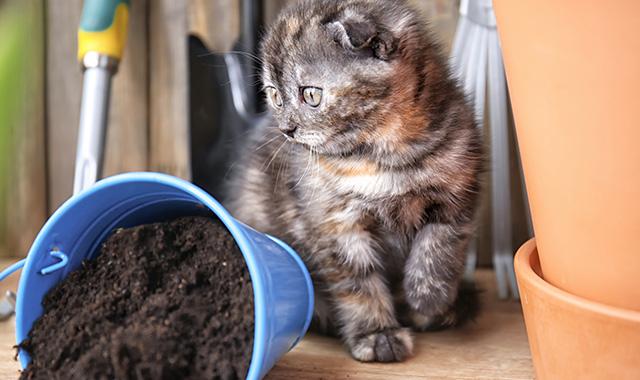 Come tenere lontani i gatti dalle piante in giardino
