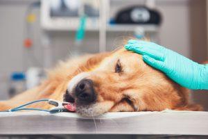 Sterilizzazione cane femmina e maschio