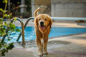 Terme per cani e padroni