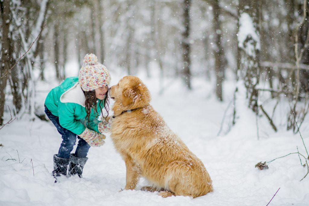 Golden Retriever sulla neve