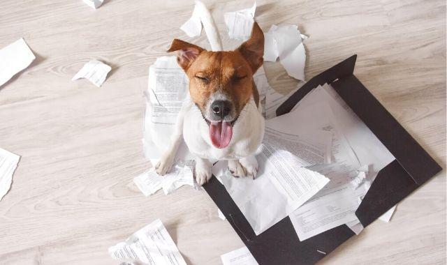 Cane in casa: regole e consigli
