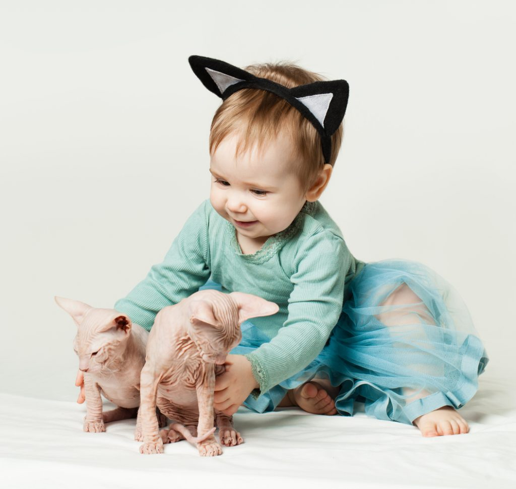 Gatto Sphynx carattere
