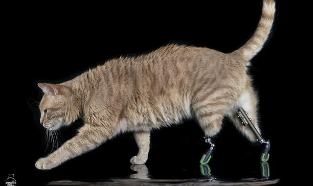 Gatto bionico Vito con due protesi