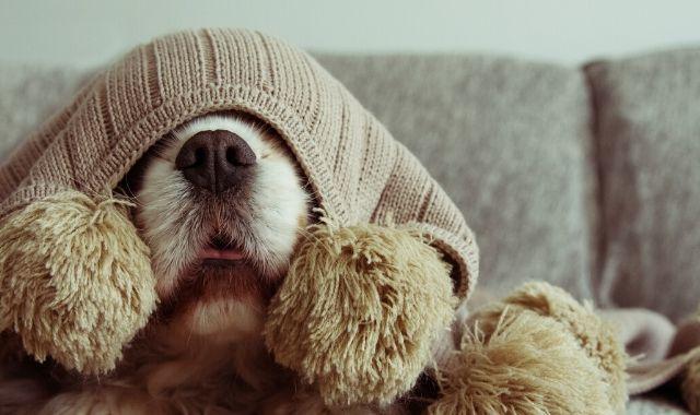 Razze di cani che soffrono il freddo più delle altre